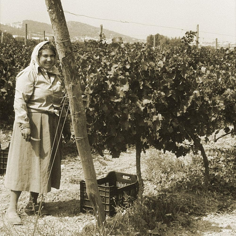 old woman at a vineyard in Athens