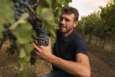 Strofilia vinyard in athens man holding grapes