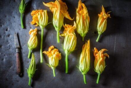 zucchini blossoms on a spread