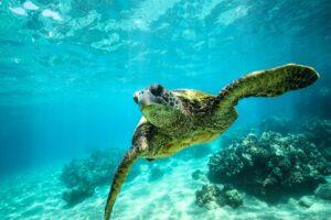 Loggerhead turtle alonissos marine park small min - Valef Yachts Chartering